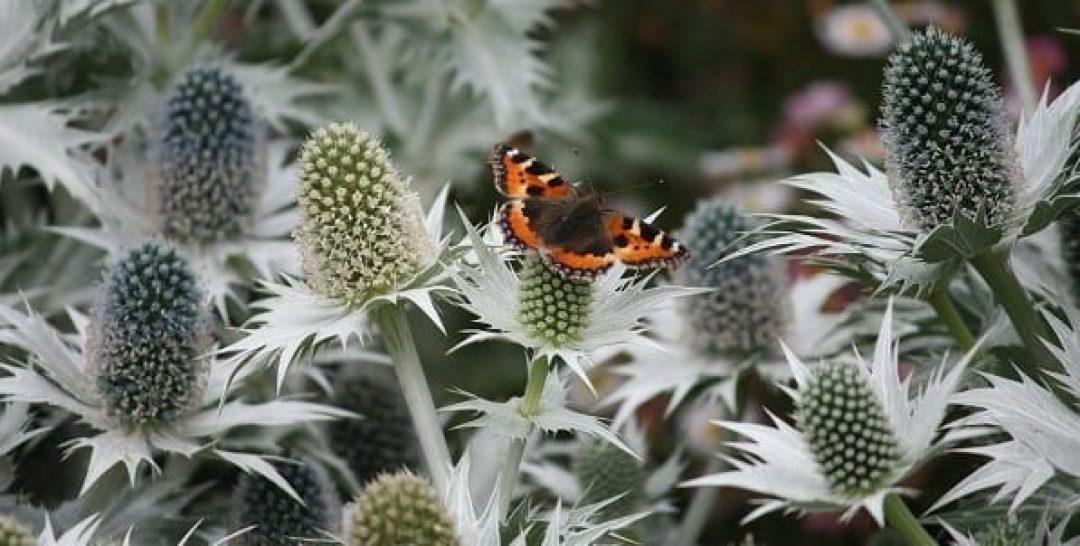 Birds and Butterflies Walk resized