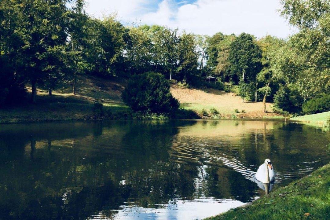 Swan 3 hestercombe