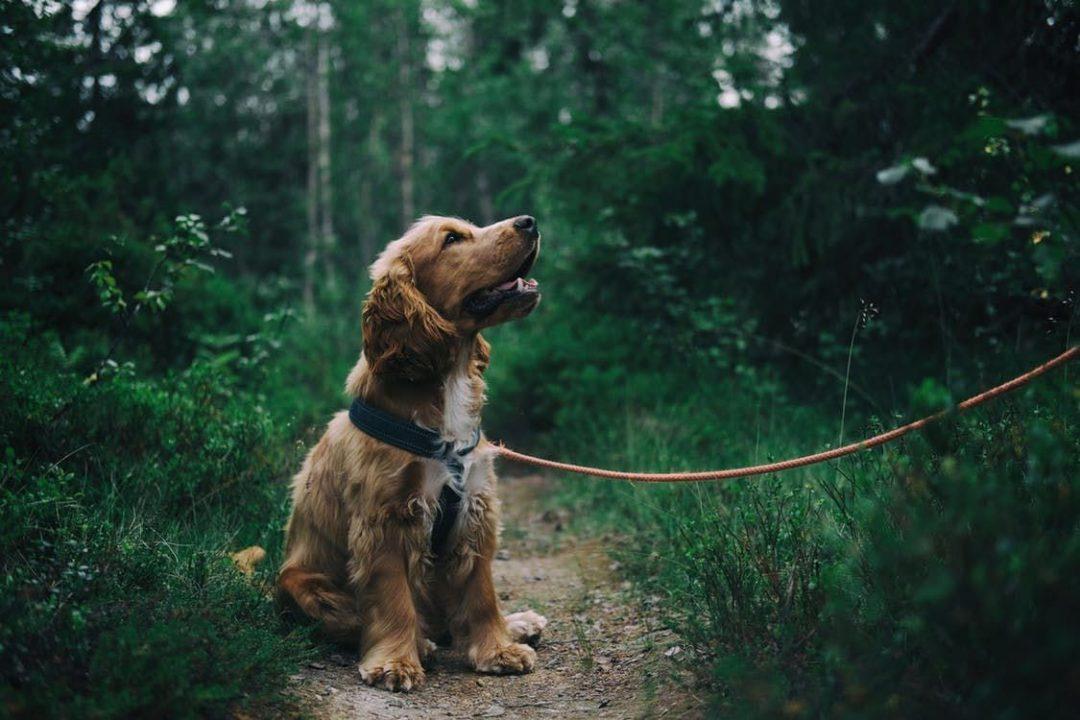 Enjoying dog walks in somerset hestercombe blog
