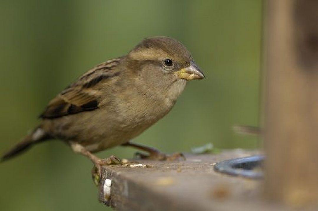 Birds at Hestercombe