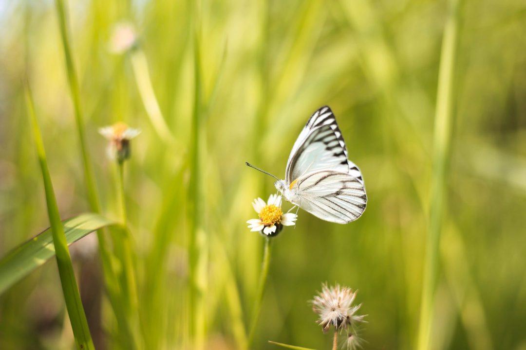 Encourage wildlife into garden hestercombe satria bagaskara 1134982