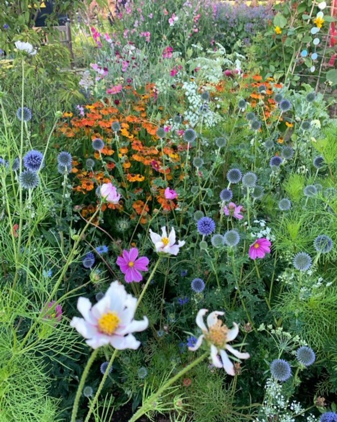 Flower beds clairegreensladeblog hestercombe