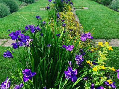 East Rill irises hestercombe