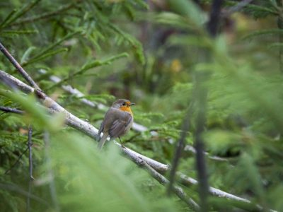 Big garden birdwatch hestercombe web 2