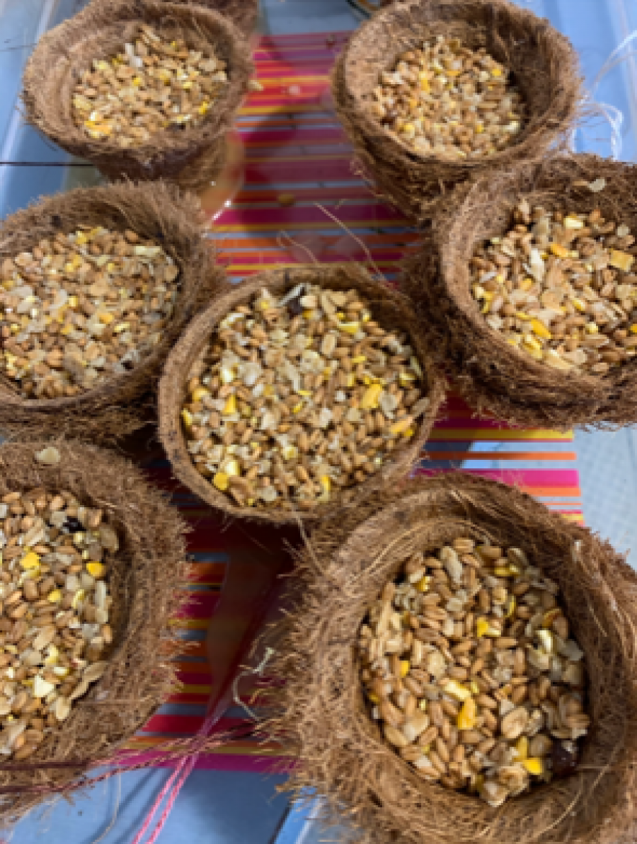 Coir pot bird feeders with suet and seed mix