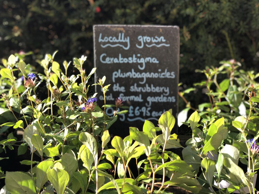 Plant sale Hestercombe IMG 5235