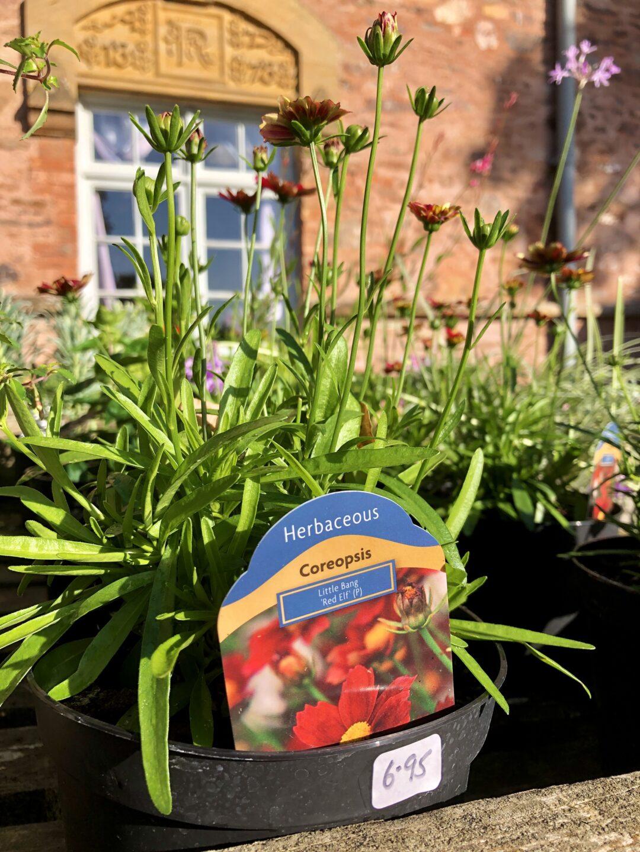 Plant sale Hestercombe IMG 5249