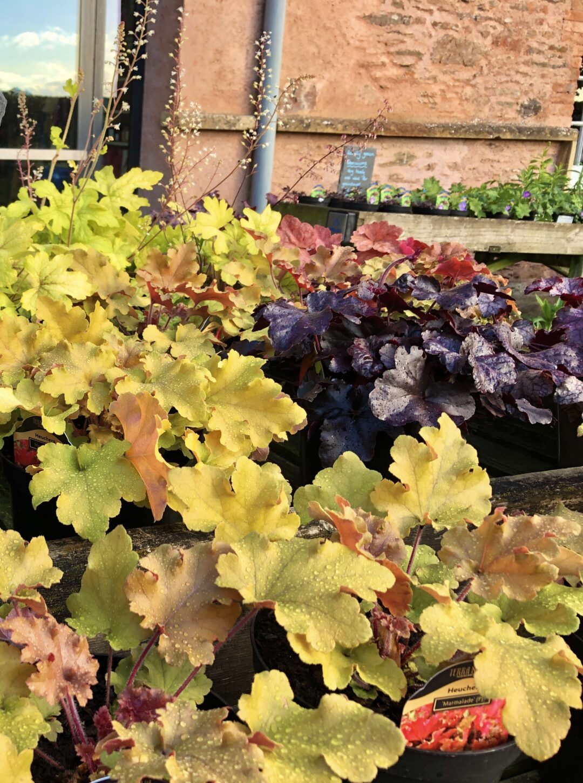 Annual end of season plant sale
