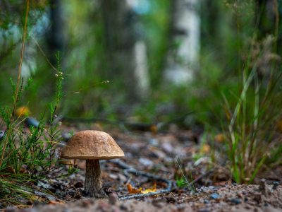 Discover plenty of different types of mushrooms at Hestercombe Gardens' fungal foray