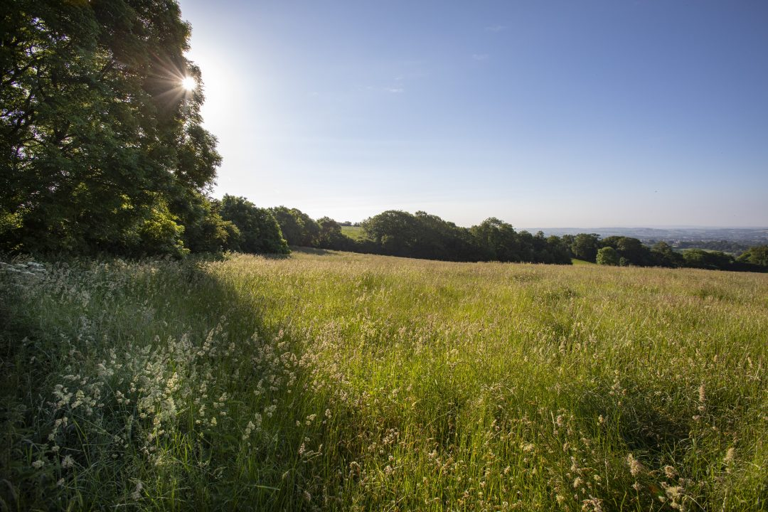 Protect our bats hestercombe wildflower meadows 1 J7 A3023