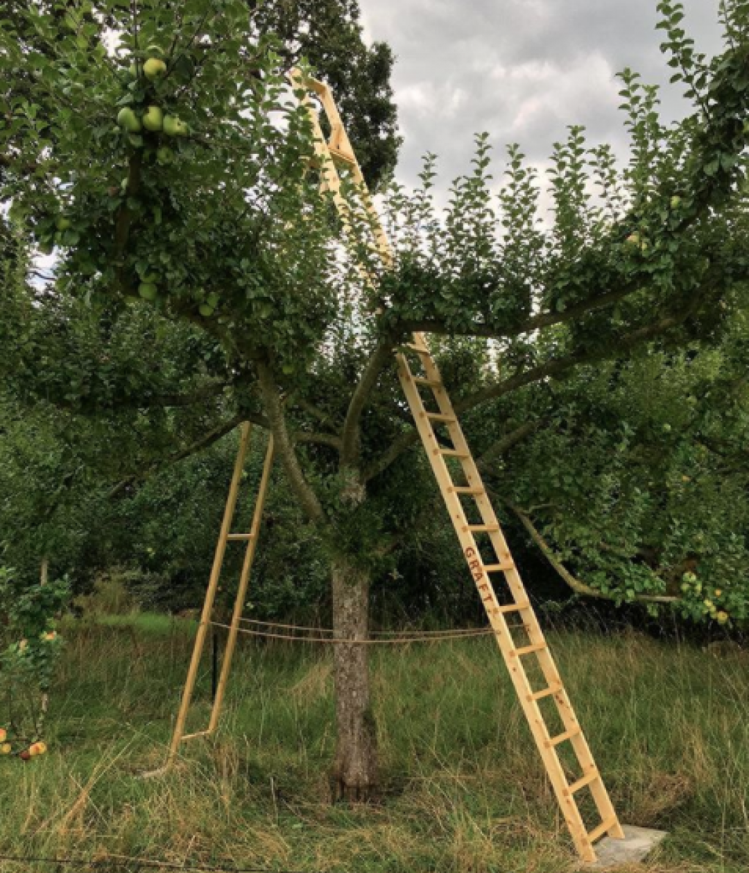 Graft Ladder Jo Lathwood Open Up Hestercombe photo by Tim Martin