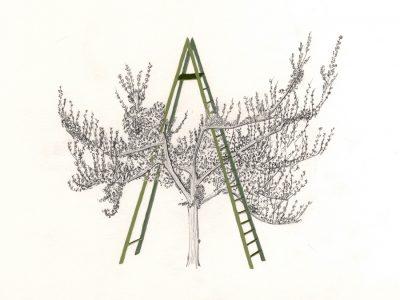 Jo Lathwood Graft Ladder apple tree Open Up Hestercombe Gallery 1
